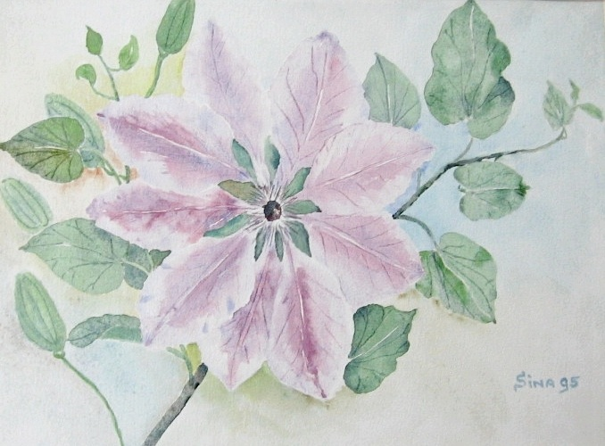 Clematis bloem Nelly Moser in aquarel
